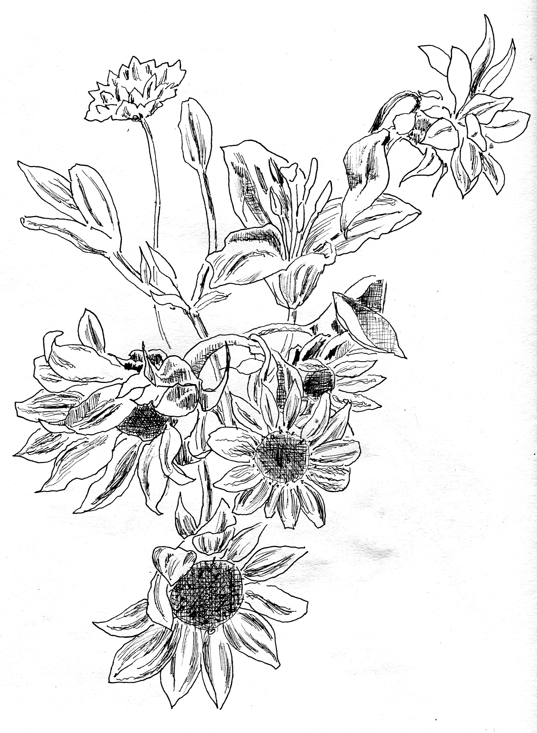 Line Drawing Of Flowers : Moved permanently
