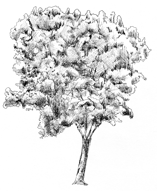 Ohh well- Another Tree Study